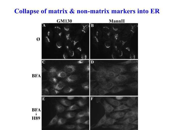 Collapse of matrix & non-matrix markers into ER