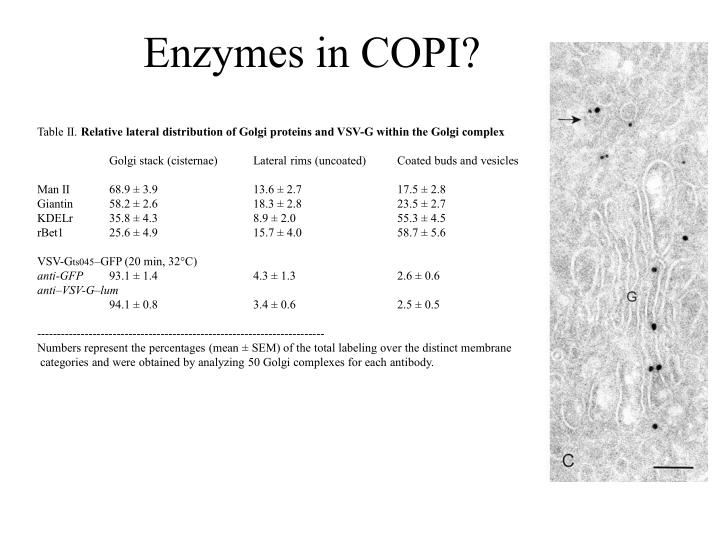 Enzymes in COPI?