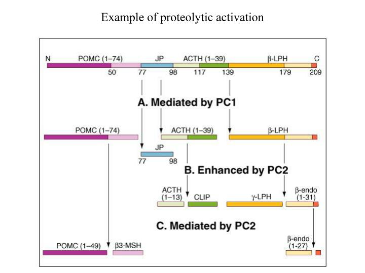 Example of proteolytic activation
