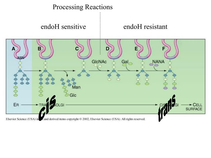Processing Reactions