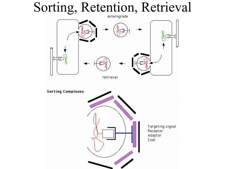 Sorting retention retrieval