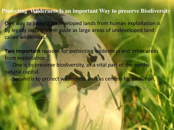 Protecting  Wilderness Is an important Way to preserve Biodiversity