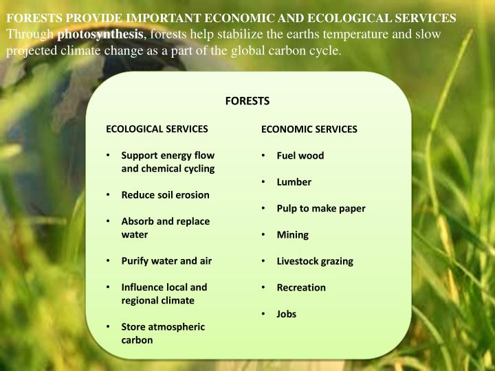 FORESTS PROVIDE IMPORTANT ECONOMIC AND ECOLOGICAL SERVICES