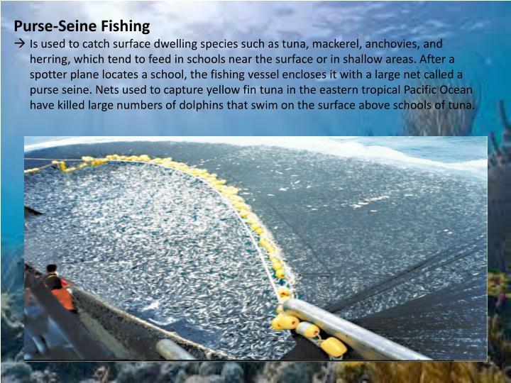 Purse-Seine Fishing