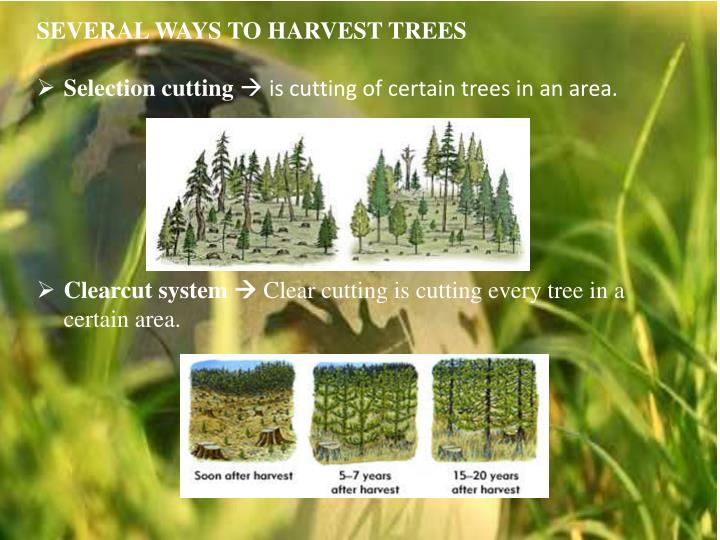 SEVERAL WAYS TO HARVEST TREES