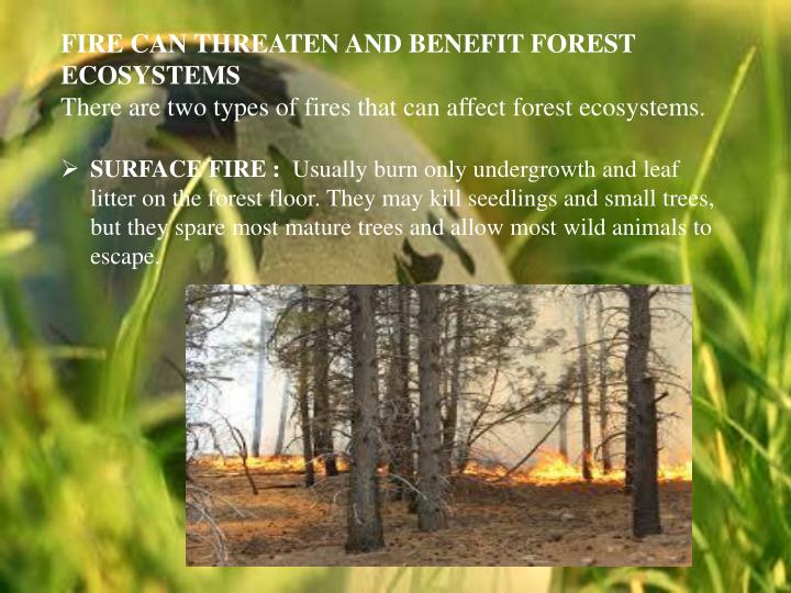 FIRE CAN THREATEN AND BENEFIT FOREST ECOSYSTEMS