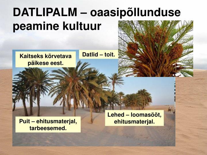 DATLIPALM – oaasipõllunduse peamine kultuur