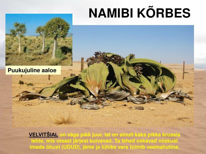 NAMIBI KÕRBES