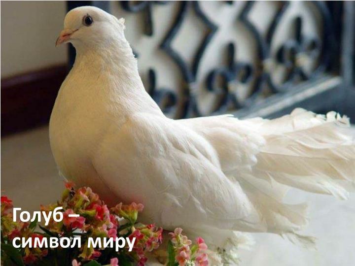 примета на балкон прилетели голуби удобный поиск
