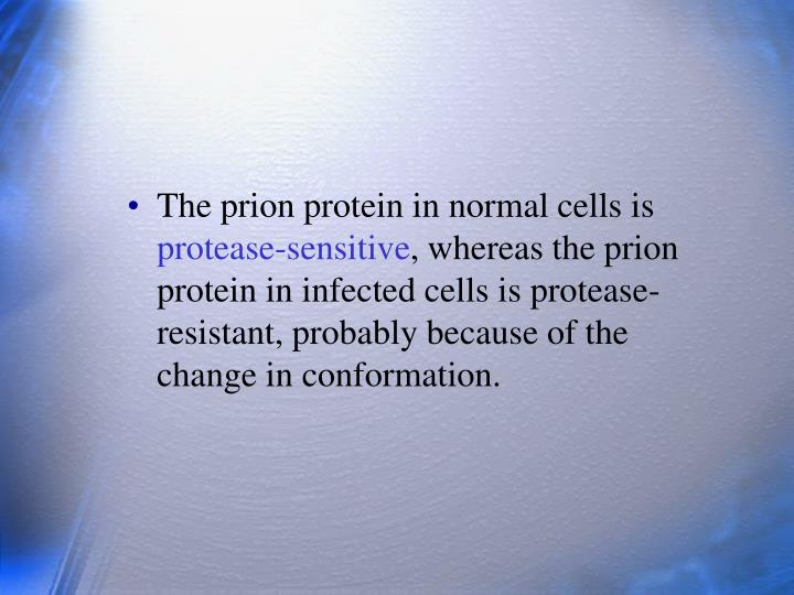 The prion protein in normal cells is