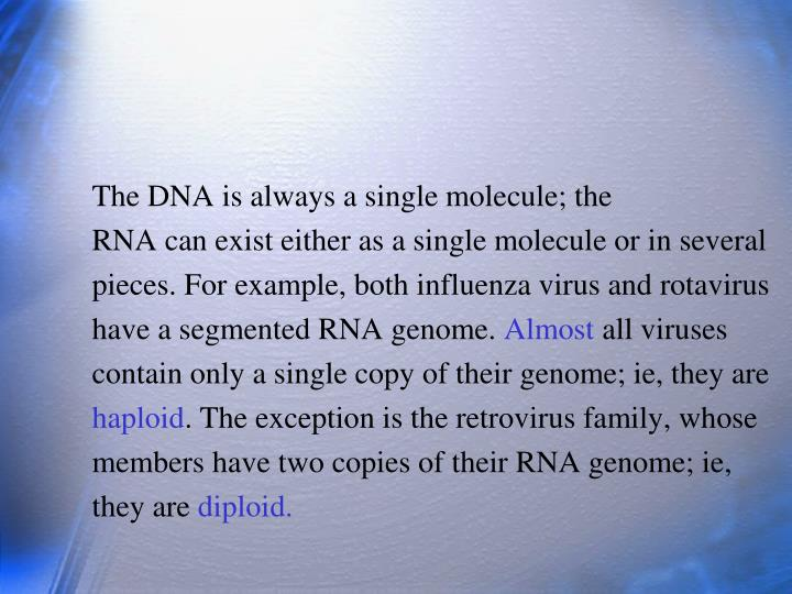 The DNA is always a single molecule; the