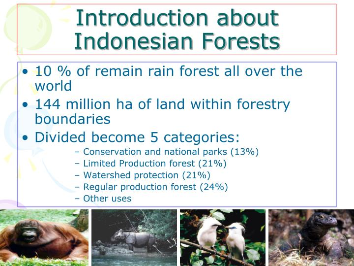 Introduction about Indonesian Forests