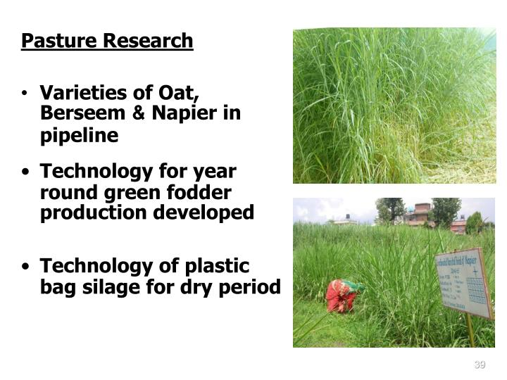 Pasture Research