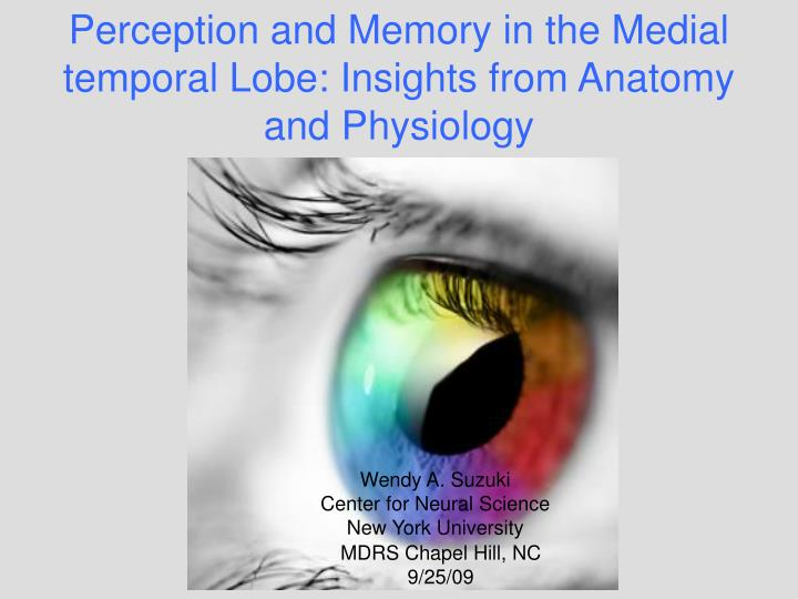 Ppt Perception And Memory In The Medial Temporal Lobe Insights