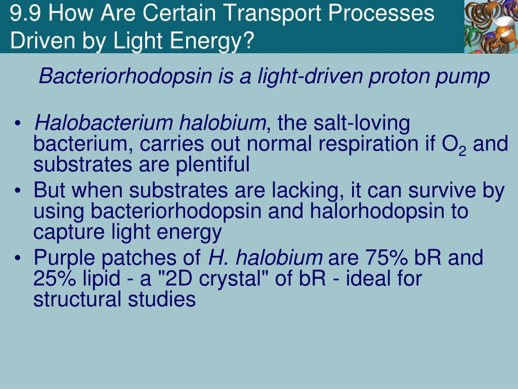PPT - Chapter 9 Membrane Transport PowerPoint Presentation