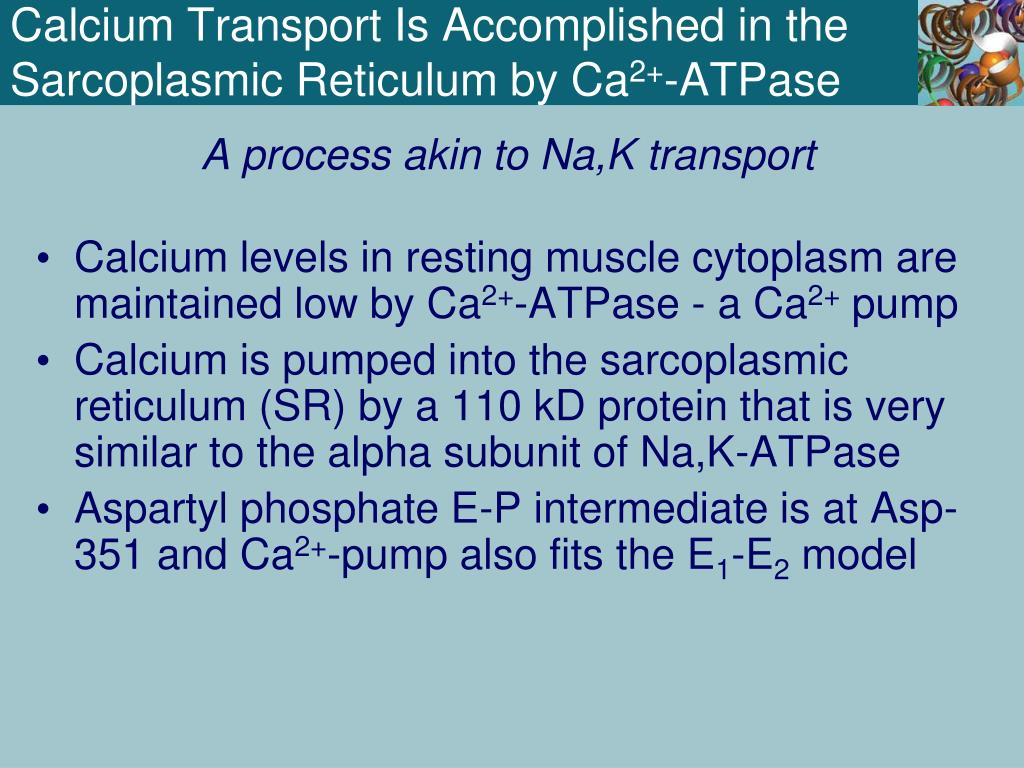 PPT - Chapter 9 Membrane Transport PowerPoint Presentation - ID:4405907