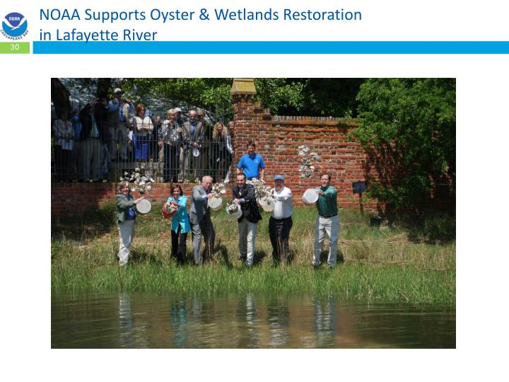 NOAA Supports Oyster & Wetlands Restoration
