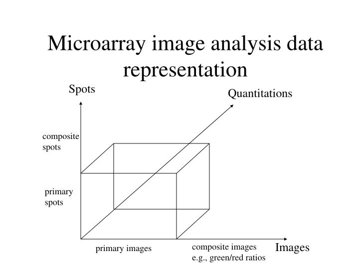 Microarray image analysis data representation