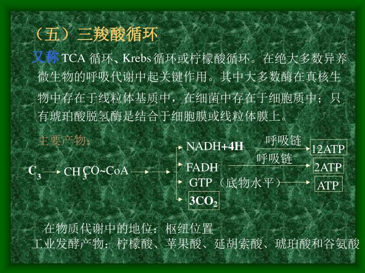 (五)三羧酸循环