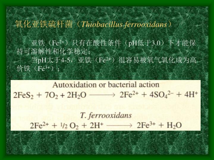 氧化亚铁硫杆菌(
