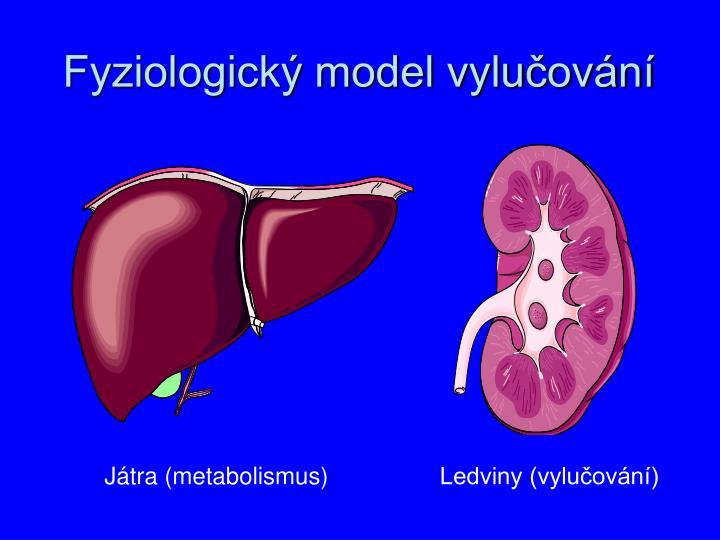Fyziologický model vylučování