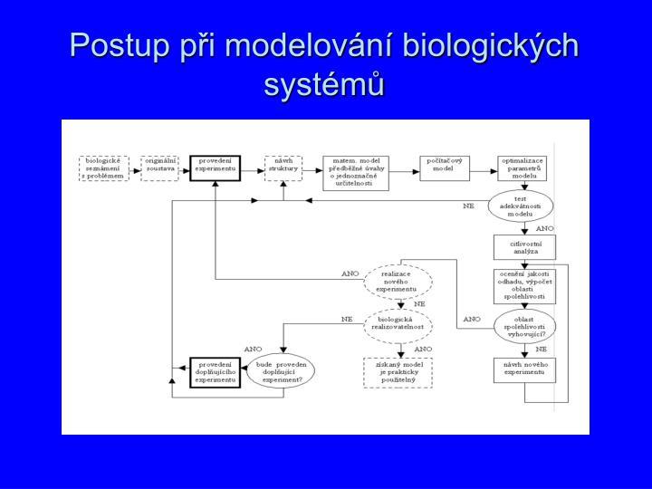 Postup p i modelov n biologick ch syst m