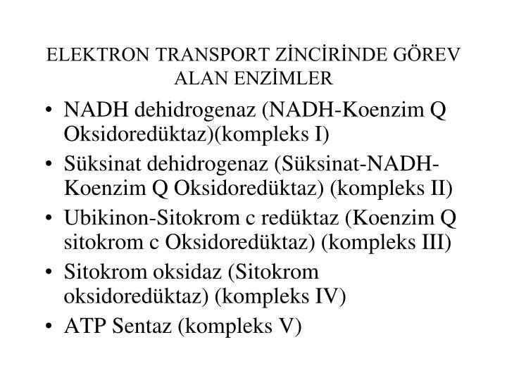 ELEKTRON TRANSPORT ZİNCİRİNDE GÖREV ALAN ENZİMLER
