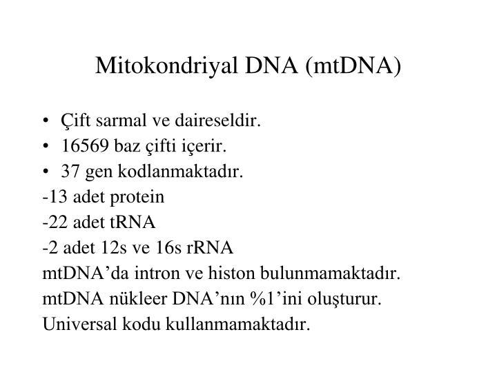 Mitokondriyal DNA (mtDNA)