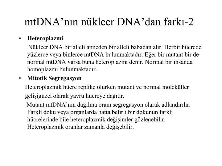 mtDNA'nın nükleer DNA'dan farkı-2