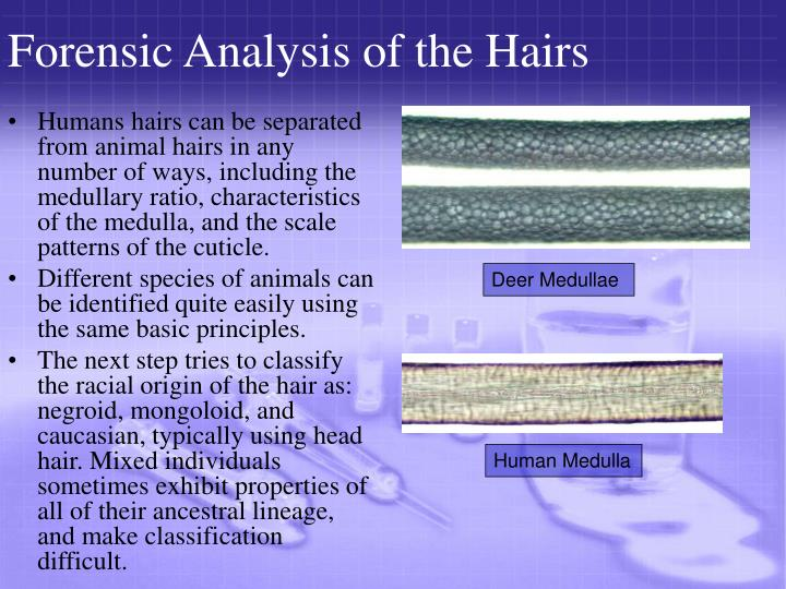 Forensic Analysis of the Hairs
