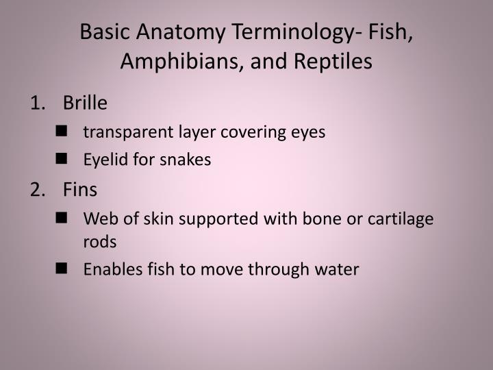Basic Anatomy Terminology- Fish, Amphibians, and Reptiles