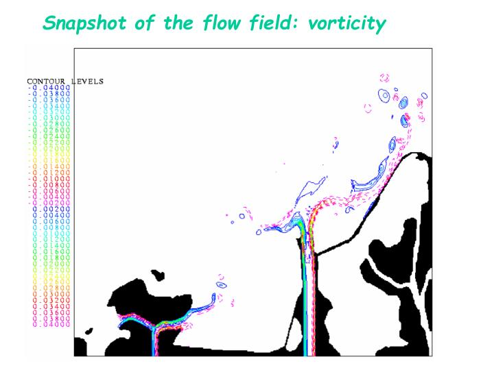 Snapshot of the flow field: vorticity