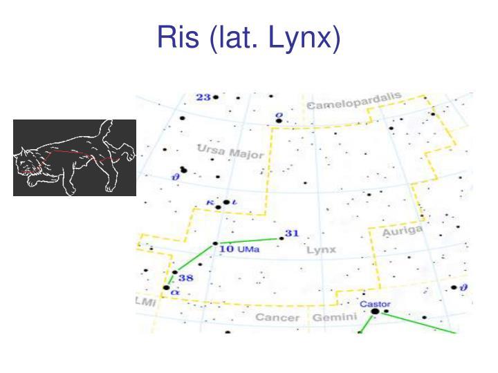 Ris (lat. Lynx)