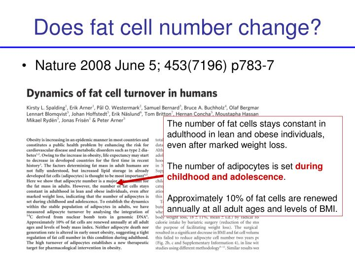 Does fat cell number change?