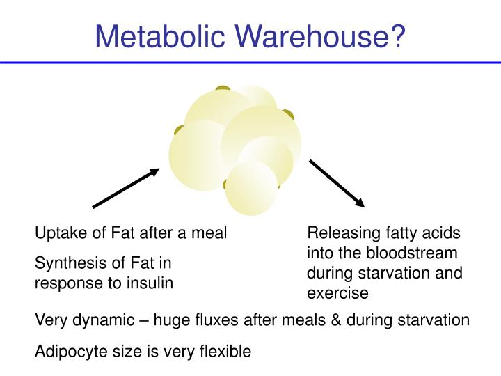 Metabolic Warehouse?