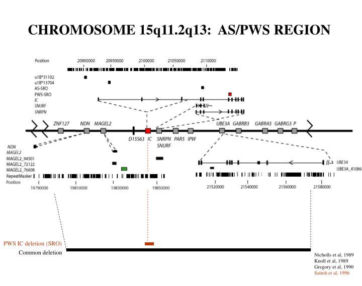 CHROMOSOME 15q11.2q13:  AS/PWS REGION