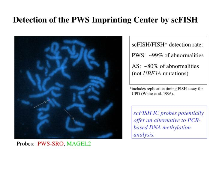 Detection of the PWS Imprinting Center by scFISH
