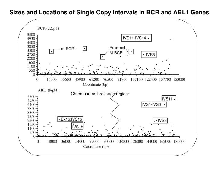 Sizes and Locations of Single Copy Intervals in BCR and ABL1 Genes
