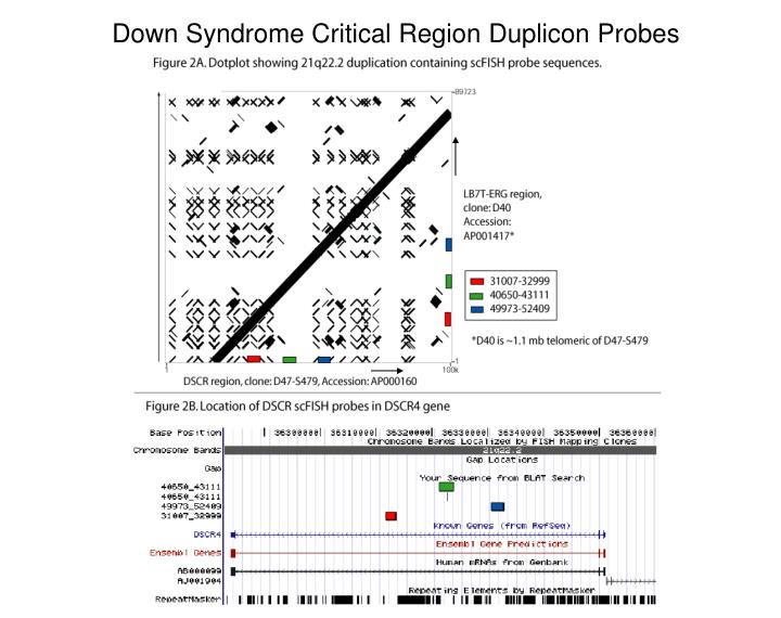Down Syndrome Critical Region Duplicon Probes