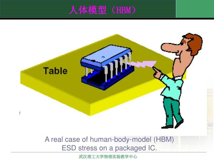 人体模型(