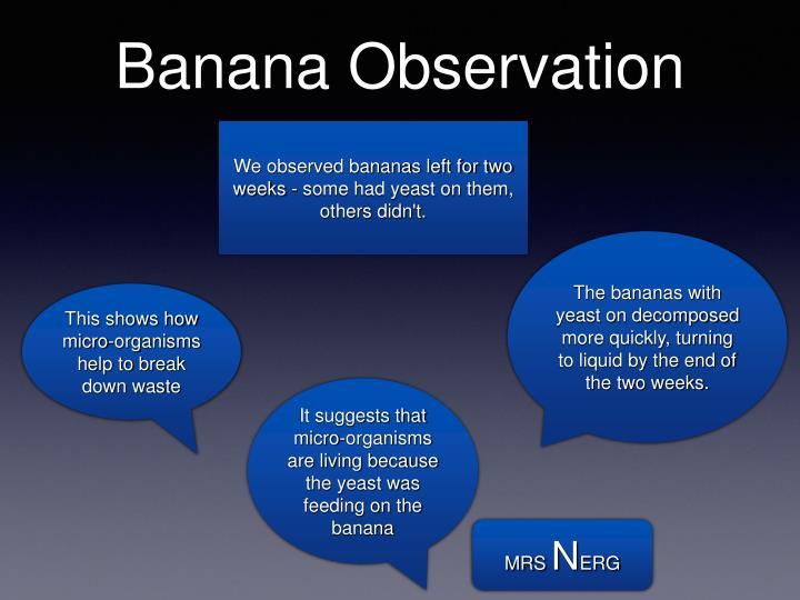 Banana Observation