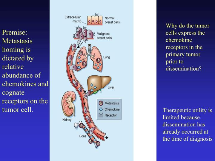Why do the tumor cells express the chemokine receptors in the primary tumor prior to dissemination?