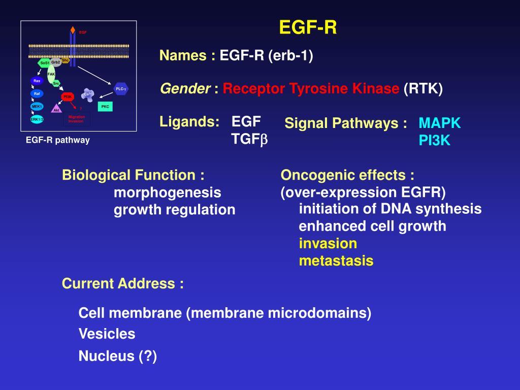 PEST Domain-Enriched Tyrosine Phosphatase (PEP) Regulation