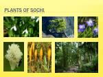 plants of sochi