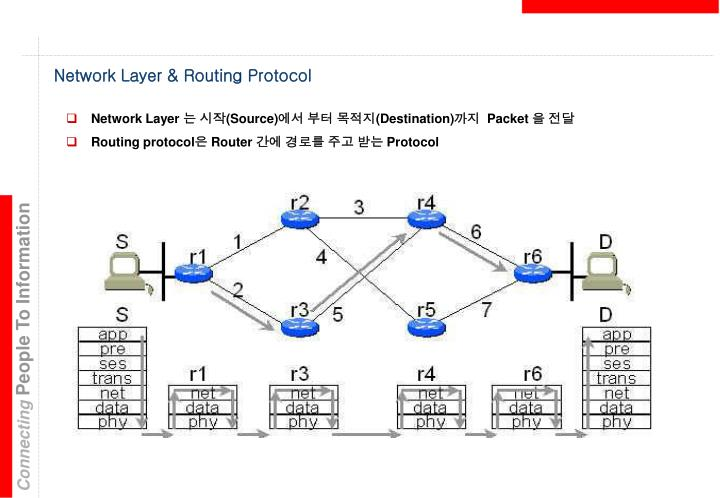 Network Layer & Routing Protocol