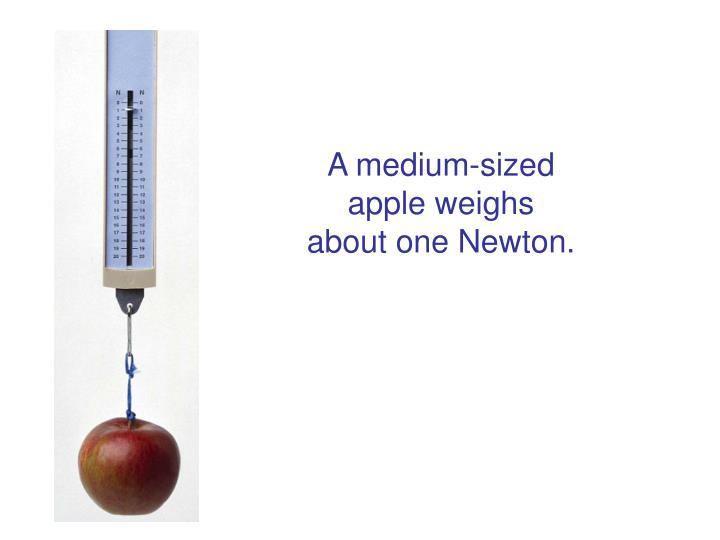 A medium-sized