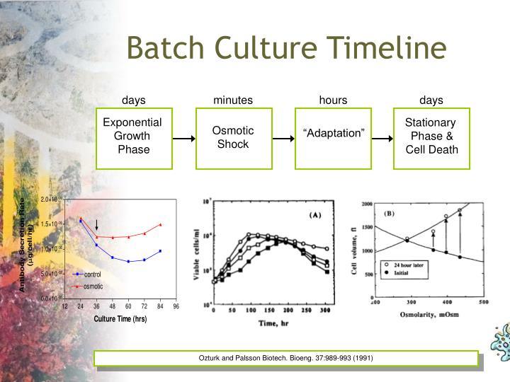 Batch Culture Timeline
