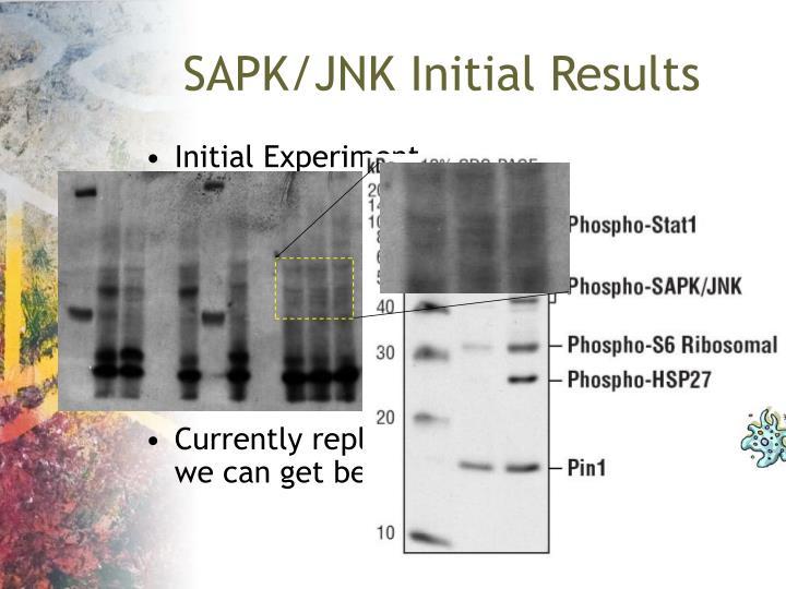 SAPK/JNK Initial Results