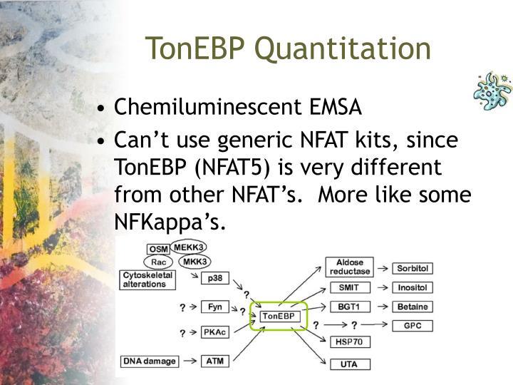 TonEBP Quantitation