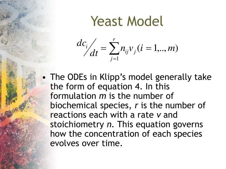 Yeast Model
